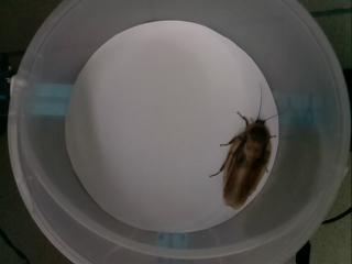 тестовая картинка для поиска таракана