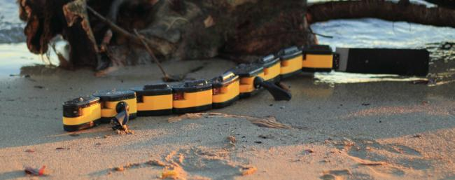 Salamandra Robotica II — робот-саламандра