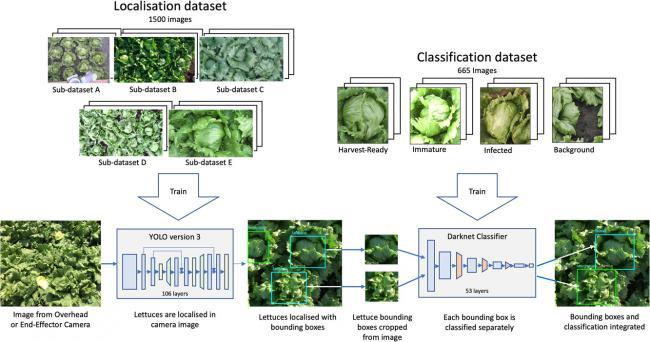 нейросети для детектирования салата
