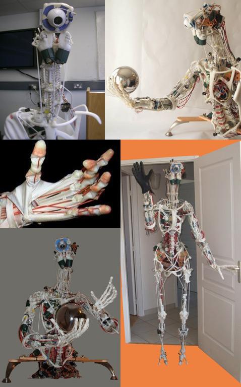 ECCERobot - робот с человеческой анатомией