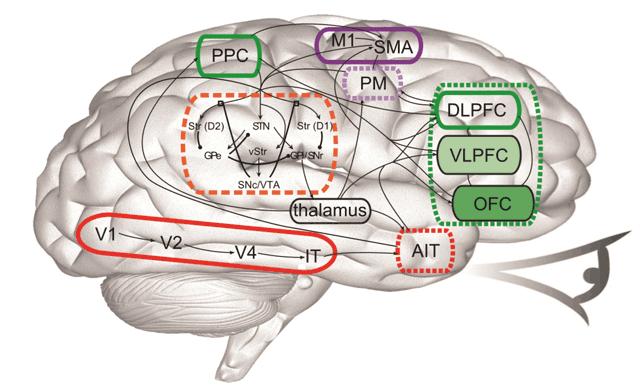 компьютерная модель головного мозга
