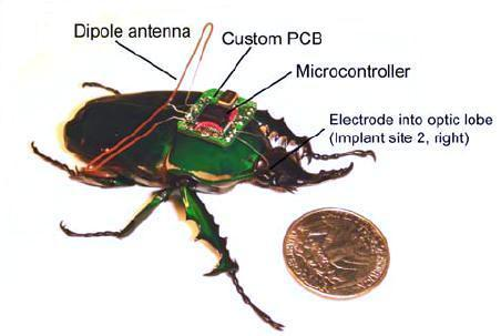 Радиоуправляемый жук