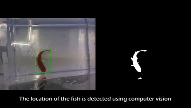 Выделение рыбки
