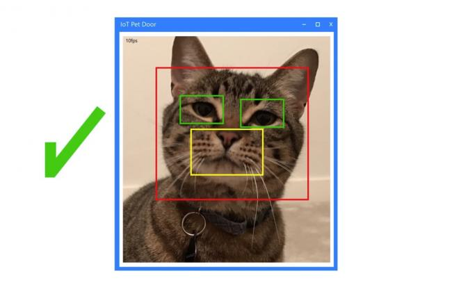 идентификация кошки